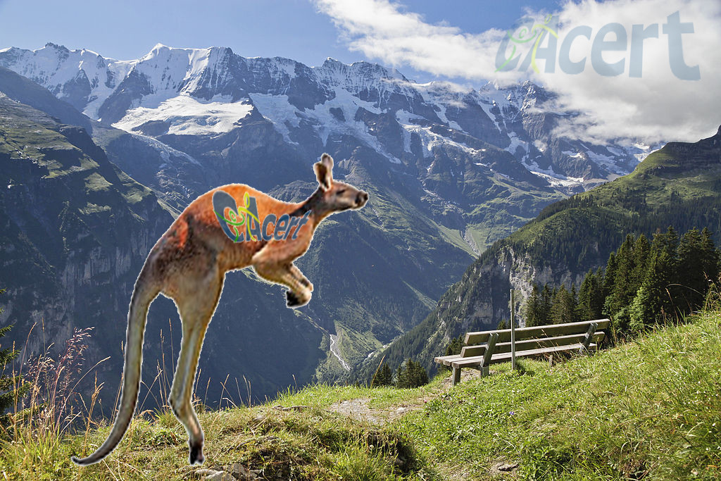A kangooroo in the Swiss alps